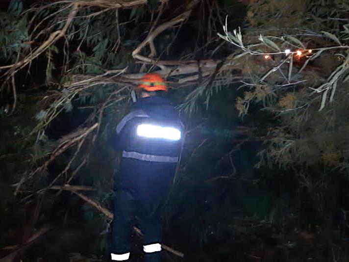 Адлерский АСО Дерево
